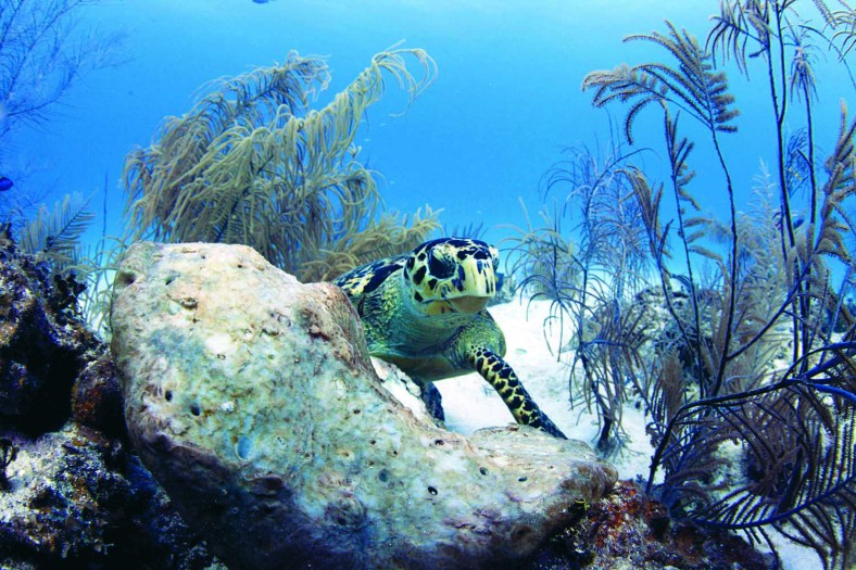 Site: East Chute/Cayman Mariner