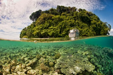 Kimbe Bay is known as the coral crucible, holding up to 400 different species.