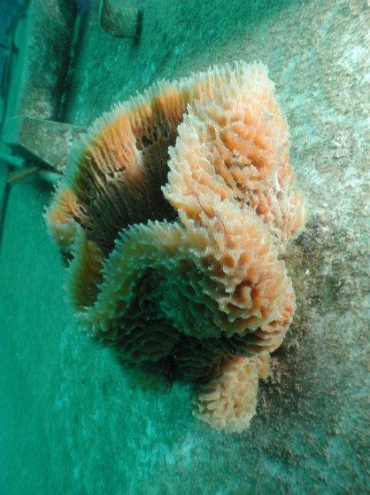 Substrate ID - Sponge