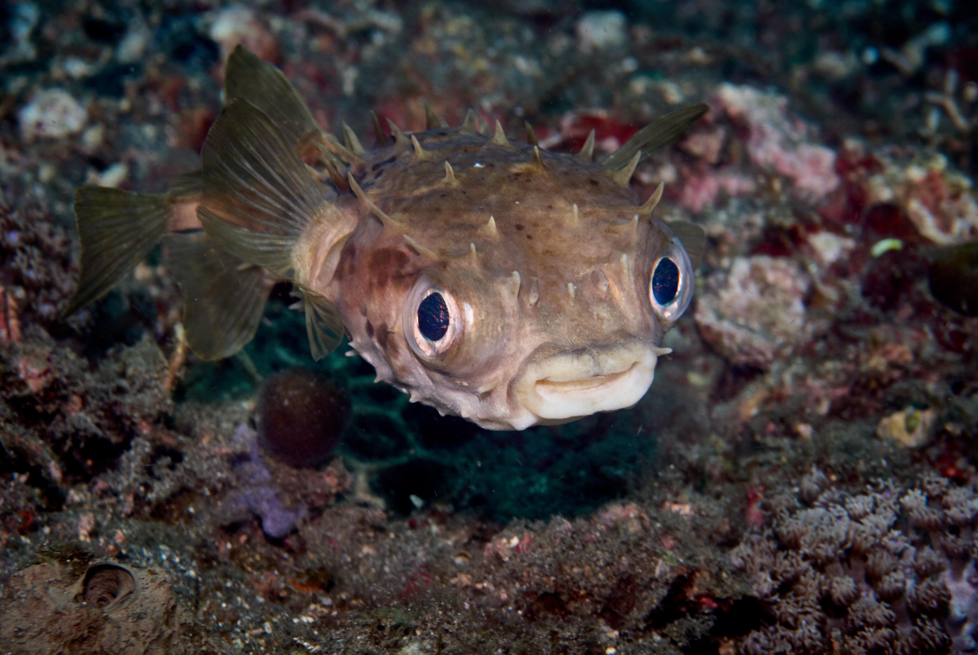 Ten Cutest Underwater Animals Scuba Diver Life