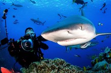 Shark shoot dive2