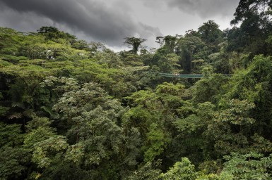 Skyadventures near Arenal volcano offers a bird's-eye view of the rainforest canopy from a number of hanging bridges