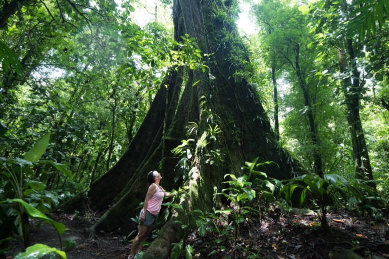 Towering forests make visitors feel small in Costa Rican rainforests