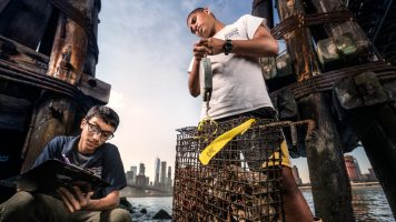 Aquaculture students from NYHS working with filing cabinet-style artificial reefs filled with spat (baby oysters) on recycled oyster shells. One World Trade Center and the Manhattan skyline stand in the background. Photo courtesy of Benjamin Von Wong