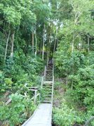 After arriving at Kakaban Island by boat from Derawan Island, Indonesia, visitors followed the wooden path through the trees and up the steps.