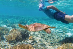 Peter Gash and turtle Credit Tourism and Events Queensland