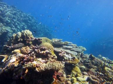Munda Reef