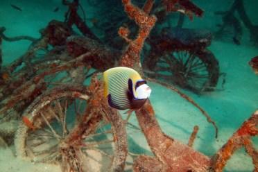 Fish life at LUX South Ari Atoll