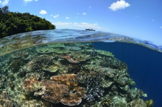 Healthy hard coral is one of the highlights of Tawali reefs. (Photo courtesy of Tawali Resort).