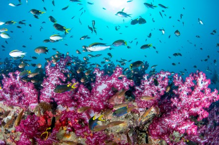 The soft coral that covers the SS Yongala gives the 100-plus year old wreck the appearance of an underwater garden (Photo: Nadia Aly)