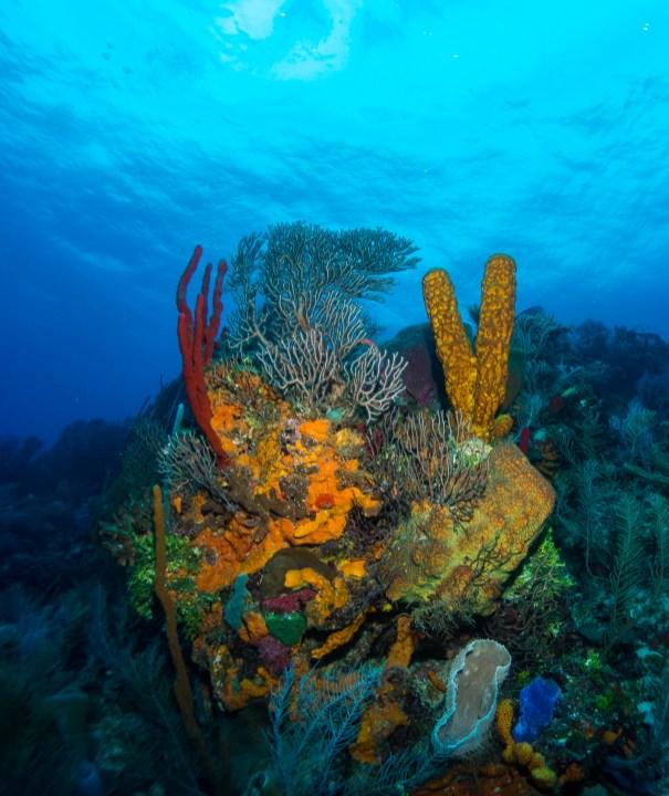Bright, healthy coral adorns Tackle Box Canyons (photo by Lia McLain)