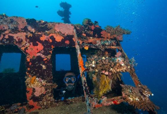 Bonzer Wreck (photo credit: Jayne Jenkins)