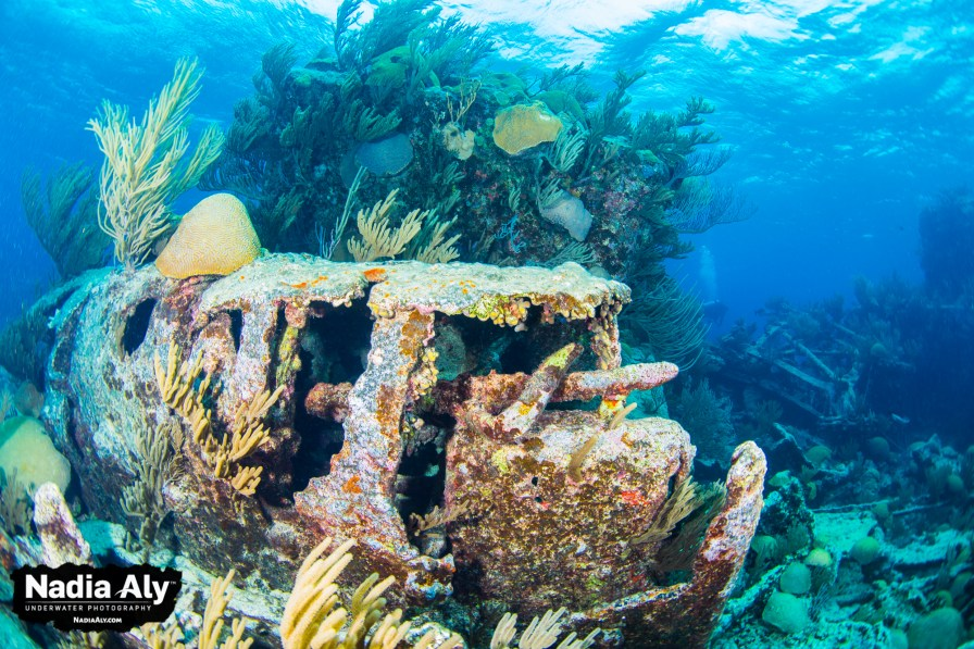 November dive destinations
