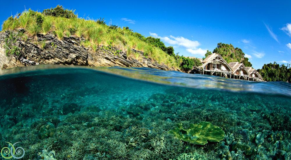 The world-class house reef. (Courtesy Misool Eco Resort)