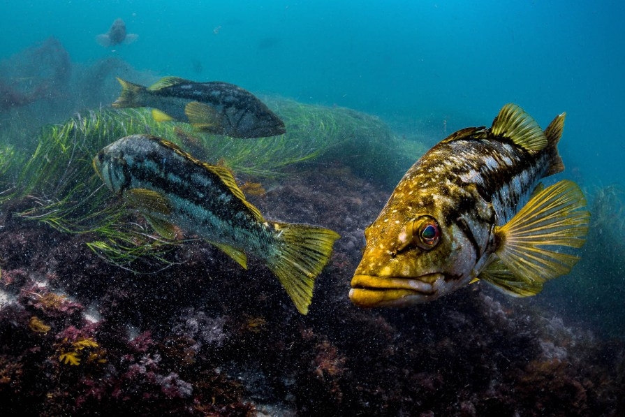 southern california sea life