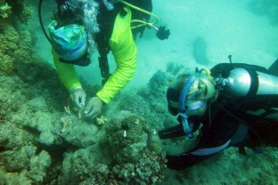 planting coral