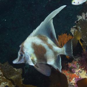 Scuba diving at Poor Knights Islands