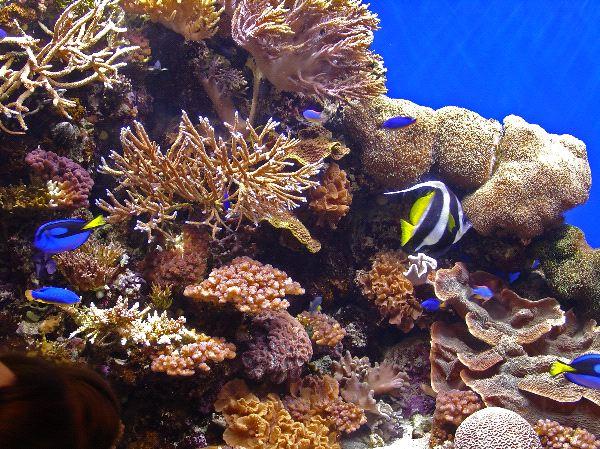 Masbango Reef