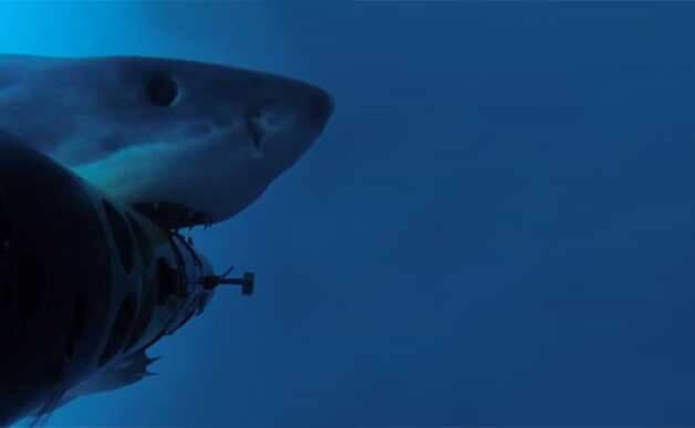 shark_attack_drone_222_628