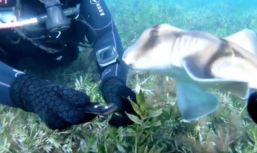WATCH: Scuba Divers Rescue Shark Tied to Ocean Floor by Fishing Line