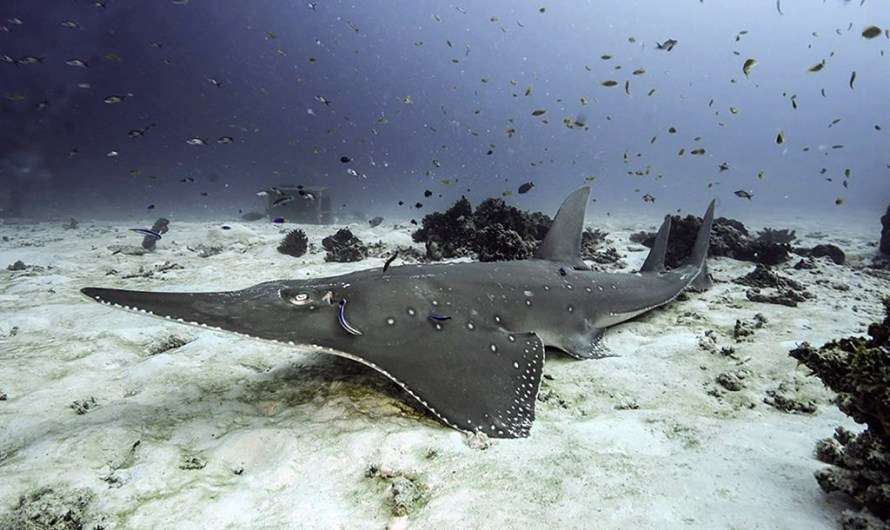 Shark guardians seek diver-storytellers