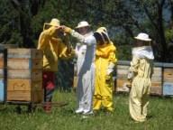 Lezioni di apicoltura ai giovani nell'apiario dei Bisclack