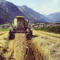 Filiera cerealicola progetto regiograno 2