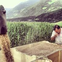 Filiera cerealicola progetto regiograno 3