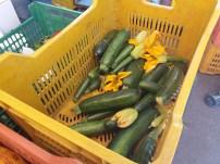 mercato agricolo diffuso di Mola di Bari - fiori di zucchine