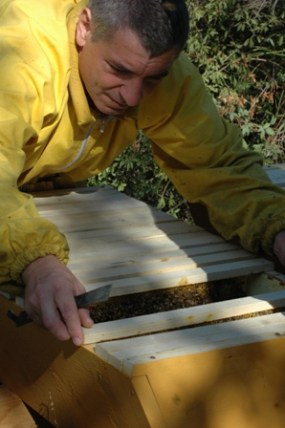 Marco Valentini, apicoltore