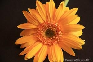Giochiamo al botanico: le parti del fiore