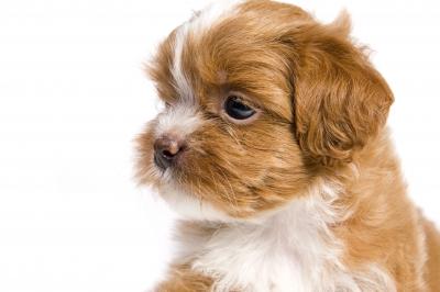 Crescere con un Pet: evento per bambini e animali