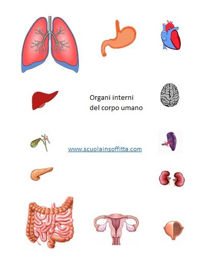 Gioco per conoscere il corpo umano e gli organi interni for Disegni per interni