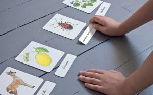 Carte tematiche Montessori: 5 idee fai da te