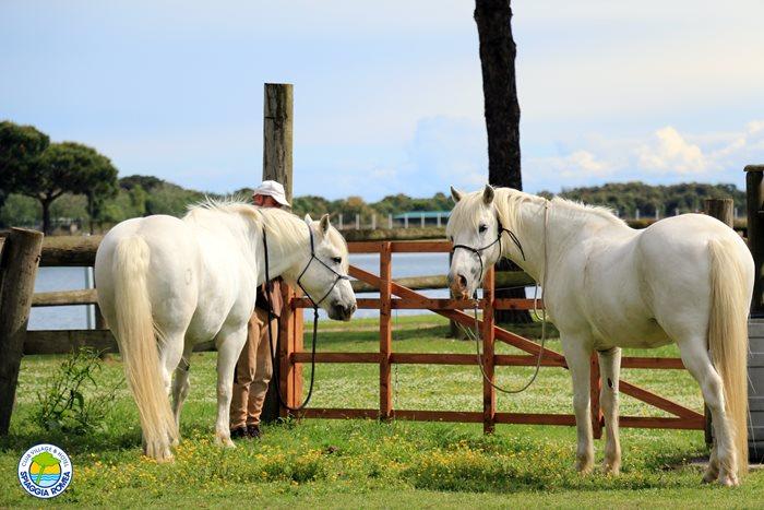 villaggio per bambini con cavalli