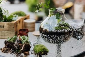 Giardino in miniatura fai da te