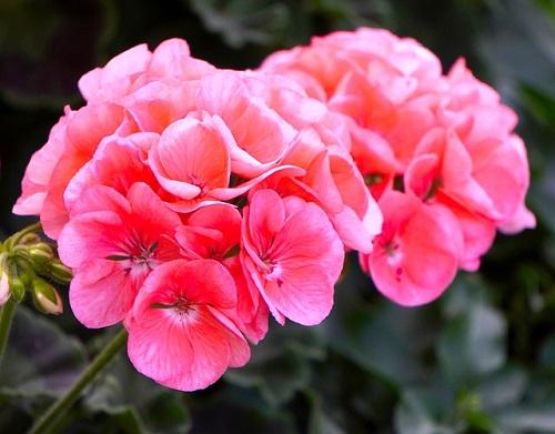 piante che fioriscono a lungo