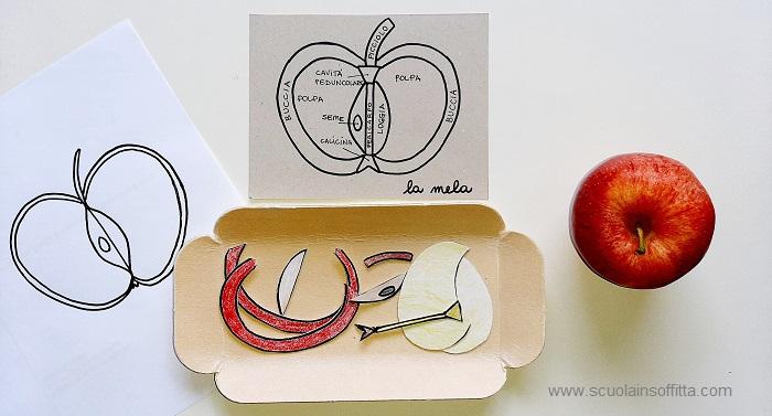 puzzle della mela fai da te