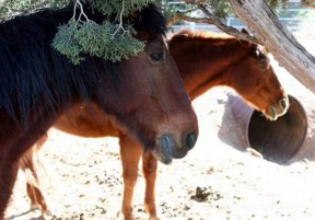 Robert Redford and Monte Montana have it made in the shade at the Animal Tracks rescue ranch.