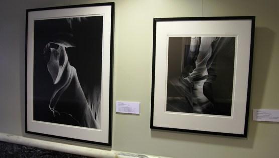 first-floor-art-gallery-shadow-in-art-2