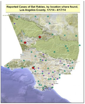 Rabid Bat Reported In Newhall, Third In County Since February