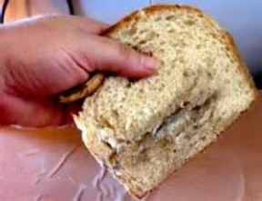 Figure 1: Mold growing on a piece of bread.