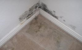 Figure 3: Mold growing on the plasterboard of a damp wall.