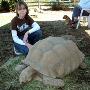 The writer's son Chis with a 200-pound sulcata.