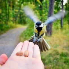 feedbird