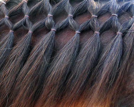 fancy braids on mane