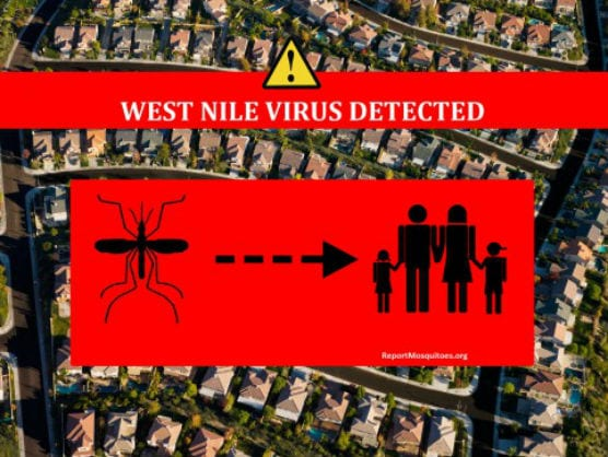 west nile virus mosquito sample