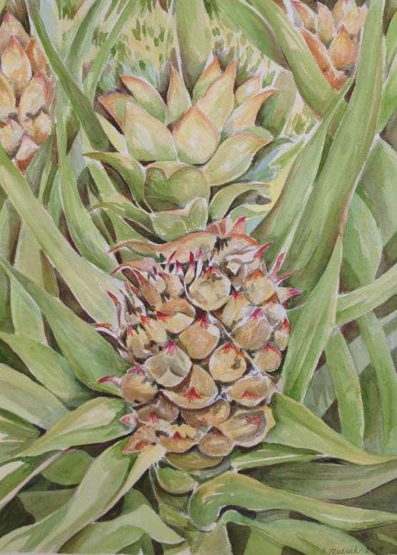 Mullich Hawaiian Pineapple