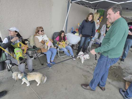 Vanessa Wilk and Scott Wilk brought their rescue dogs, Simi, left, and AV to The Brittany Foundation Adoption Day event held at Pet Supply in Saugus on Saturday. | Photo: Dan Watson/The Signal.