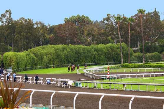 Horses on the downhill turf course at Santa Anita, approaching the dirt crossover.   Photo: Rennett Stowe/Wikimedia Commons 2.0.